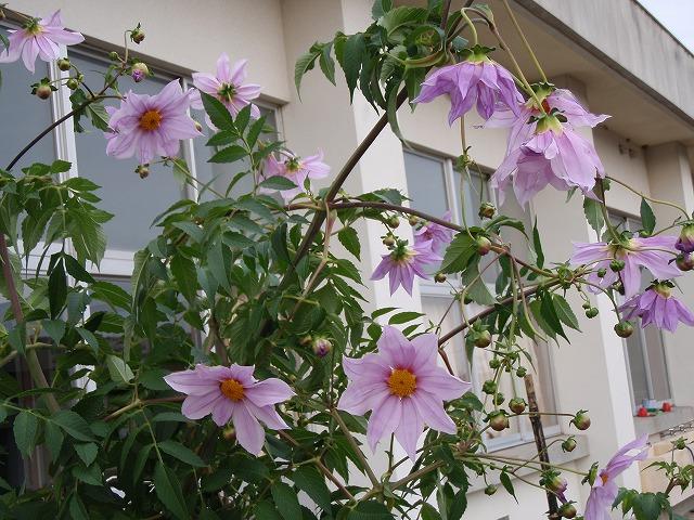http://www.tahara.ed.jp/nanbu-e/blog/blog-PB160037.jpg